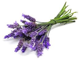 Vodka and Lavender reduce pain